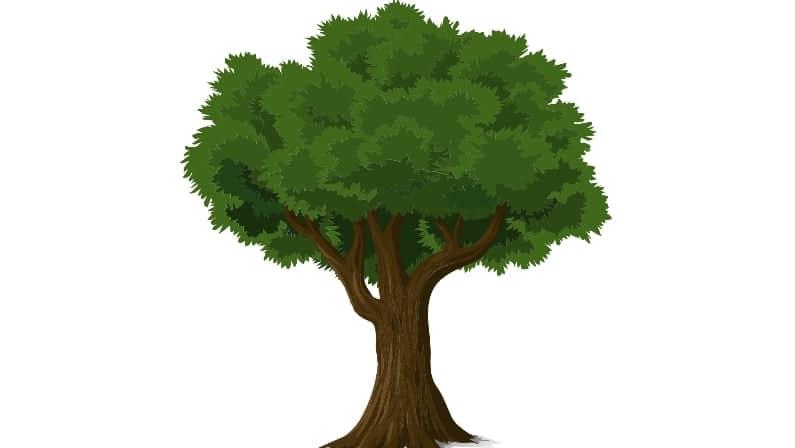 Árboles enumerados