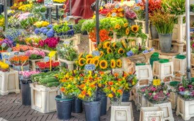 El amor por las flores