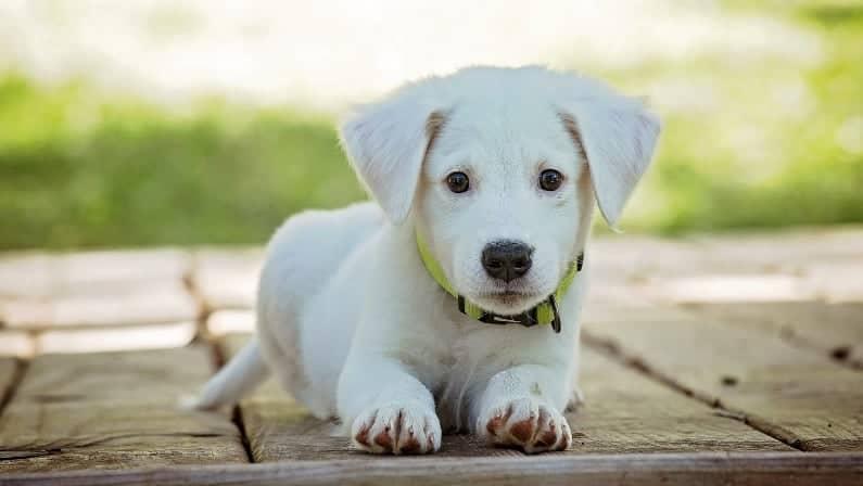 ¿Los perros pagan impuesto?