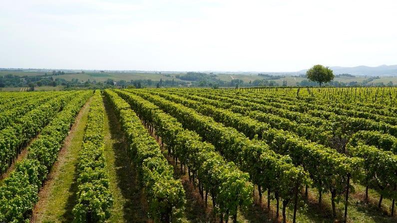 El encanto de los viñedos